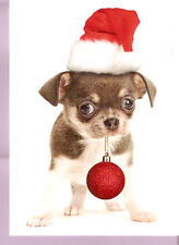Chihuahua Santa with Gift Christmas Cards Box of 12