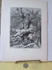 Vintage Print,LEOPARD,Our Living World,Woods,1885