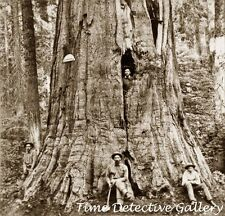 Men in Calaveras Big Trees Forest, California - c. 1870 - Historic Photo Print