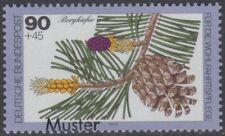 Specimen, Germany ScB568 Woodland Plant, Tree, Mountain Pine