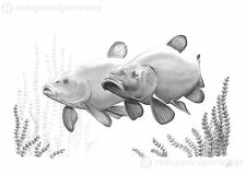 TENCH II 'Tincas Cruising' Fishing Tenchfisher Art Drawing Print Angling Picture