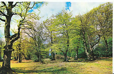 Hampshire Postcard - In The New Forest    XX817