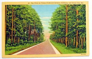 Postcard - THE PINES ON OCEAN BOULEVARD, OCEAN CITY, MARYLAND, USA (USA8-20)