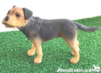 Border Terrier, quality lifelike figurine from the Leonardo range. Gift boxed.
