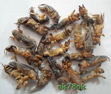 Wild Dried Mole Cricket Traditional Chinese Medicine 500g WHOLESALE