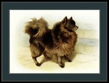 English Print Brown Pomeranian Dog Standing Art Picture