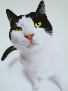 """Do I Smell Cake? Happy Birthday!"" BIRTHDAY CARD Avanti FUNNY CAT"