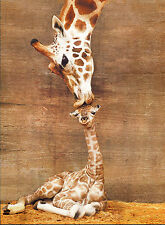 "Beautiful Giraffe First Kiss Mother Kissing Baby Canvas Art Print Poster 24X18"""