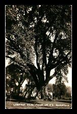 US POSTCARD LARGEST ELM TREE IN UNITED STATES MARIETTO OHIO RPPC