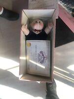 Vintage 1984 Cabbage Patch Kids PORCELAIN DOLL COLLECTION Jeffrey Nicholas W/box