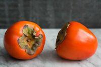 30 Seed Diospyros kaki Persimmon Fruit Tree Rare Kinds Edible Plants Home Garden