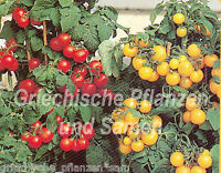 🔥 🍅 Zwerg-Tomate * Mini-Ornamental * gelb und rot 10 Samen