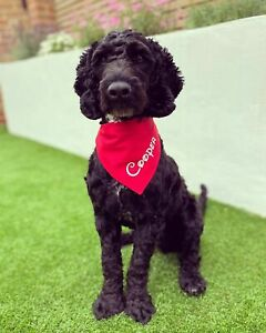 Personalised Coloured Dog Bandana Slip On Collar Scarf Neckerchief Disney Font