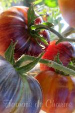 10 graines de tomates très rare Alice's Dream couleur et goût enchanteurs m.bio