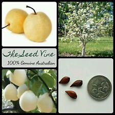 10+ CHINESE WHITE PEAR TREE SEEDS (Pyrus x bretschneideri) Fruit Flower Garden