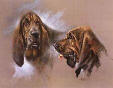 BLOODHOUND DOG FINE ART LIMITED EDITION PRINT M Cawston