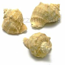 Set of 3 Big Whole Conch Shell Seashell Charm Pendants with Drilled Hanging Hole