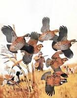 Hunting Quail, Hunter, Dogs by Lynn Bogue Hunt