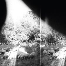 GODSPEED YOU! BLACK EMPEROR - ASUNDER,SWEET AND OTHER DISTRESS  CD NEU