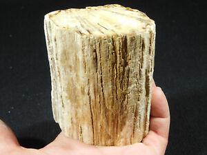 Petrified Wood Fossil Polished 579gr