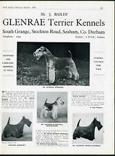 LAKELAND AND SCOTTISH TERRIER OUR DOGS 1949 DOG BREED KENNEL ADVERT PRINT PAGE