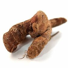 Galangal Root for Sale | Buy Galangal Online | Spice Jungle