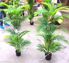 Palm Tree Décor Potted