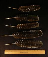 5 Turkey feathers