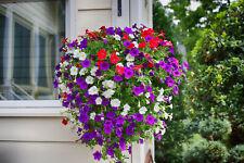 #2 Samen Saatgut Blumen PETUNIEN MISCHUNG (500) aus bio-veganer Gartenkultur