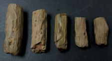 Petrified twigs set of five specimens from Patagonia, Argentina 2Aa