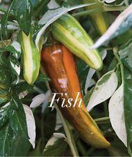 HOT CHILLI PEPPER - FISH - 10 SEEDS