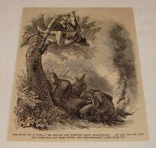 1876 magazine engraving ~ Bear Rolls Into Campfire