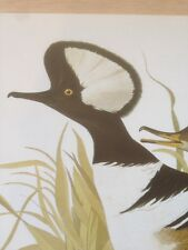 Hooded Merganser Audubon Bird Print Picture Plate Art Print