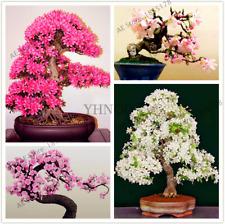 10 Pcs Seeds Japanese Sakura Flores Cherry Plants Indoor Garden Bonsai Plant Pot