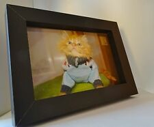 Scoot & Newt Present Seven the Gingerbread Kitten Wooden Framed 4 x 6 Photograph
