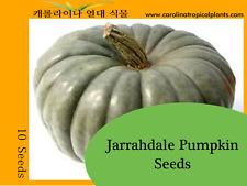 Jarrahdale Pumpkin Seeds - 10 Seed Count