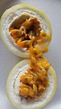 Yellow  Passion  Fruit Passiflora Edulis 25 FRESH SEEDS Edible  FLORIDA Grown