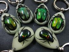 12pcs nice jewel real green beetle Turquoise beetle night light key-chains