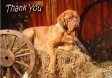 Dogue de Bordeaux Thank You Card By Starprint - No 1