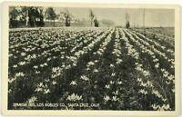 Spanish Iris Los Robles Company Santa Cruz California CA Black & White Postcard