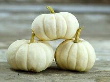 Pumpkin -WHITE CLOUD-Pumpkin Seeds-MARKET/RESTAURANT FAVOURITE-22 SEEDS