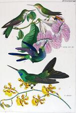 1857,REICHENBACH HUMMINGBIRDS FINE HAND COLOR ENGR. FOLIO U2B