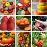 Lots 200pcs Mixed Tomato Home Garden Vegetable Fruit Seed Seeds
