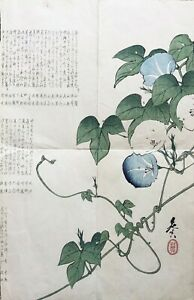 Shibata Zeshin 1807-1891) JAPANESE SURIMONO MORNING GLORY PRINT