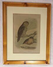 Original Coloured Lithograph by Gracuis Joseph Broinowski Owls