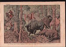 WWI Hunting Buffalo Bisons Aurochs Bialowieza Forest Poland 1921 ILLUSTRATION