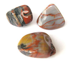 3 pc Australia Petrified Wood Polished Gemstone Crystal Tumbled Fossil RARE FIND