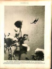 Araignée tisse sa toile photographie photo Mme Albin Guillot ILLUSTRATION 1926