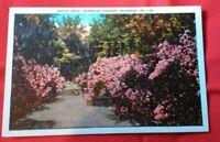 Azalea Walk, Wormsloe Gardens Savannah Georgia GA Vintage Postcard