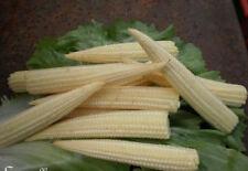 ♫ MAïS 'Mini Doux' - Zea mays ♫ Graines ♫ Plante Décorative Gustative Potagère ♫
